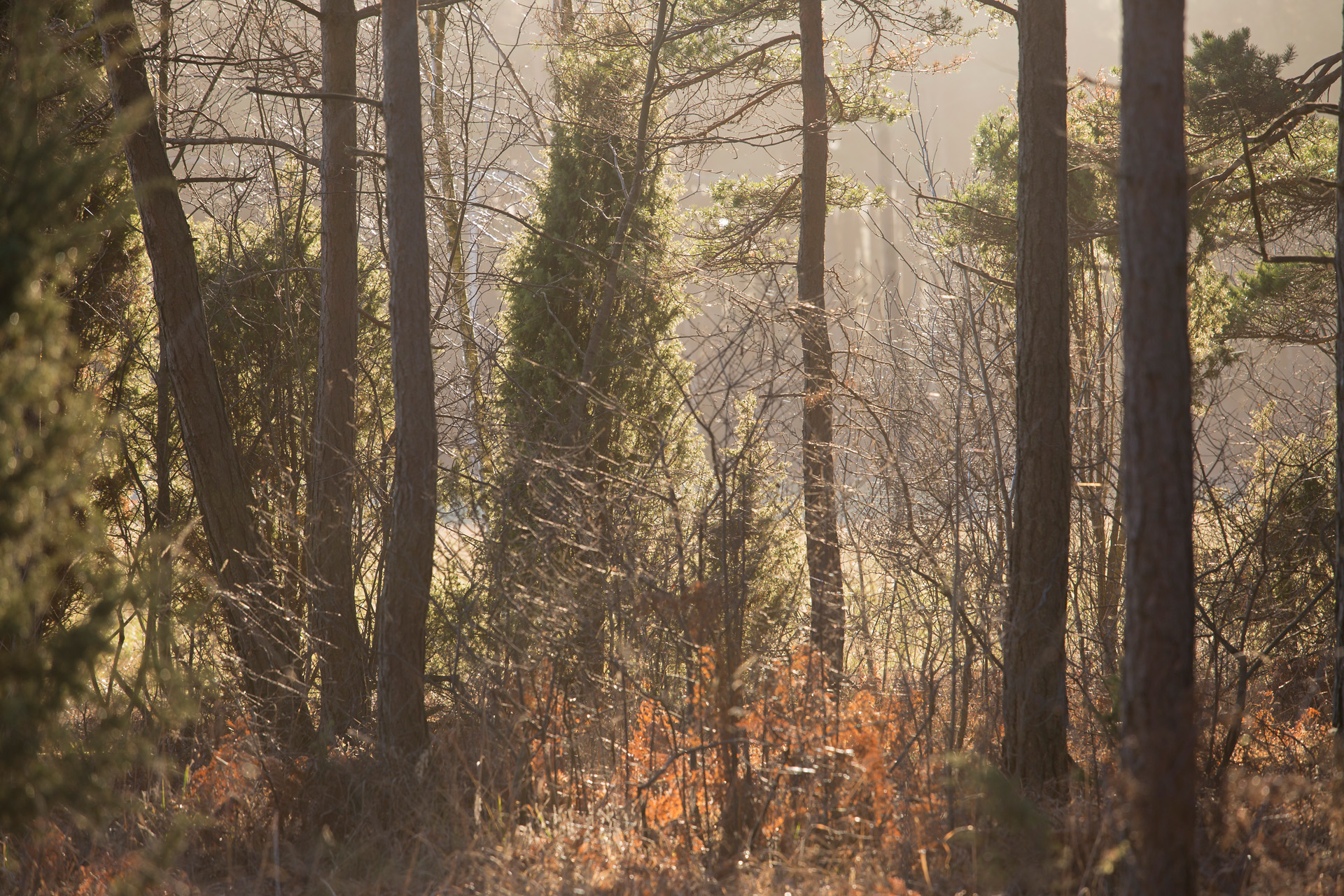 Jakt skog Alexa Produktion