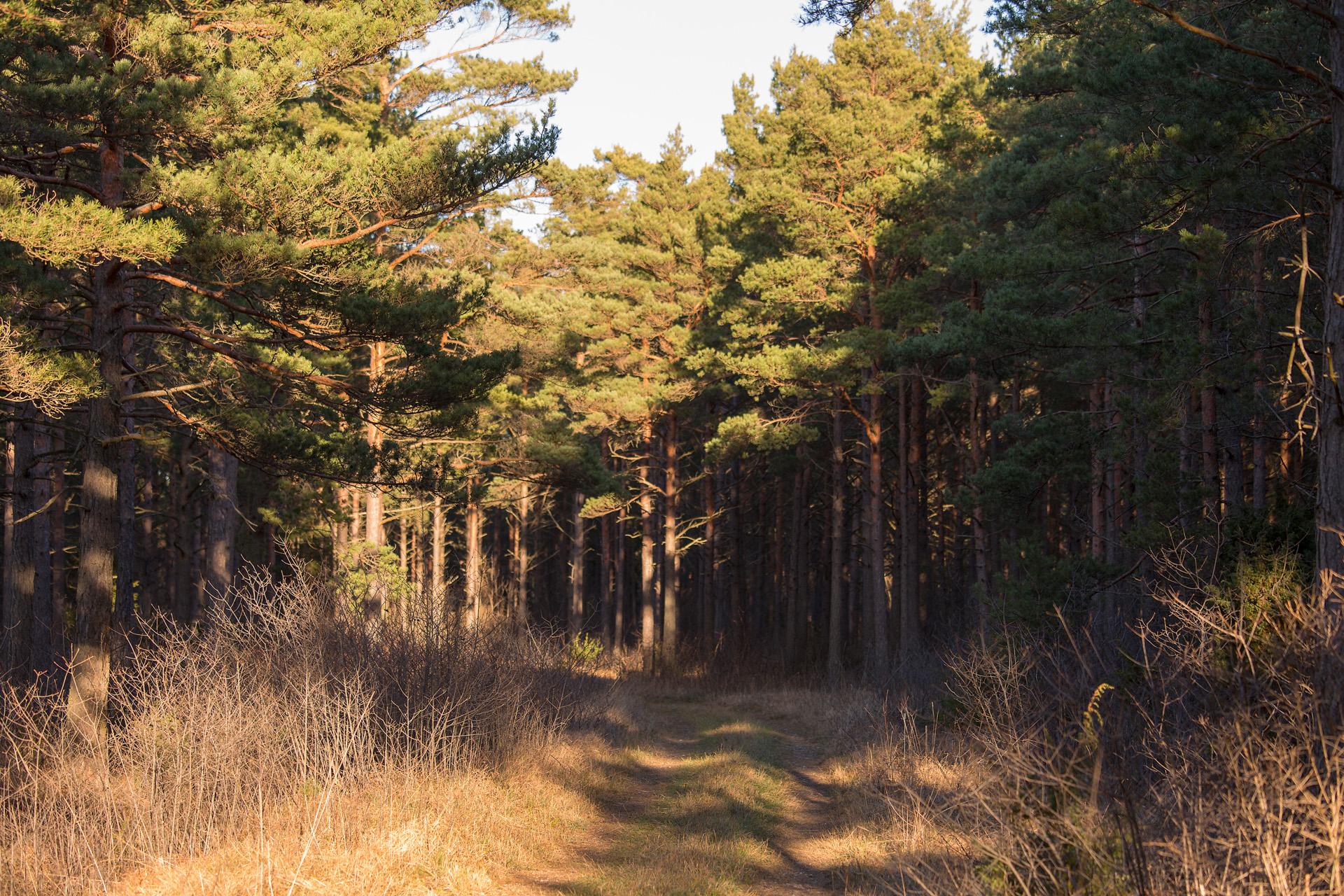 Skogen Alexa Produktion